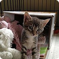 Adopt A Pet :: Zooey - Island Park, NY