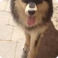Adopt A Pet :: Rocky - Saskatoon, SK