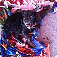 Adopt A Pet :: Harry - North Hollywood, CA