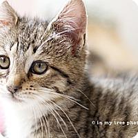 Adopt A Pet :: Gypsy - Island Park, NY