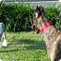 Adopt A Pet :: Big Pretty Penny - Knoxville, TN