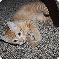Adopt A Pet :: Cecil - Stafford, VA