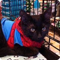 Adopt A Pet :: Mickey - San Ramon, CA