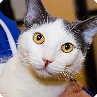 Adopt A Pet :: Maxwell - Irvine, CA