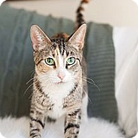 Adopt A Pet :: Lita - Addison, IL