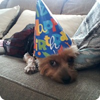 Adopt A Pet :: Marci - Homer, NY