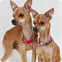 Adopt A Pet :: Rudolph and Dancer - Loomis, CA