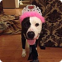 Adopt A Pet :: Turkey - Las Vegas, NV