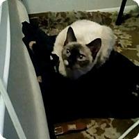 Adopt A Pet :: Savannah - New York, NY