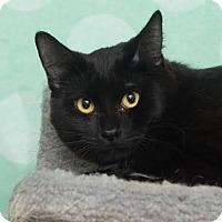 Adopt A Pet :: Triz - Chippewa Falls, WI