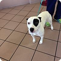 Adopt A Pet :: Wilson - Las Vegas, NV