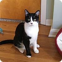 Adopt A Pet :: Louie - Avon, OH