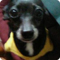 Adopt A Pet :: Damian - Andalusia, PA