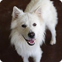 Adopt A Pet :: Alaska - San Antonio, TX
