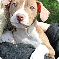 Adopt A Pet :: Aly - Mayer, MN