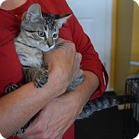 Adopt A Pet :: Aaron - Surrey, BC
