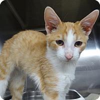 Adopt A Pet :: CAPUTO - Tucson, AZ