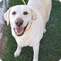 Adopt A Pet :: Rocky - Fruit Heights, UT
