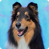 Adopt A Pet :: AIDEN - Dublin, OH