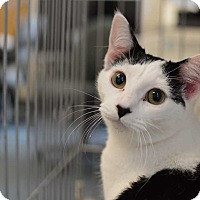 Adopt A Pet :: Patches - Youngsville, NC