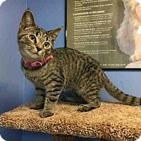 Adopt A Pet :: SIERRA - Canfield, OH