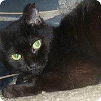 Adopt A Pet :: Elwood - Hamburg, NY