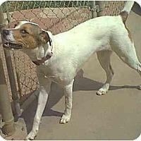 Adopt A Pet :: Marshmellow - dewey, AZ