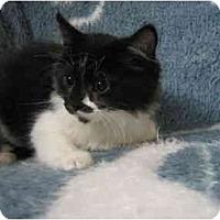 Adopt A Pet :: Vinney - Irvine, CA