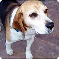 Adopt A Pet :: Henry Aaron - Phoenix, AZ
