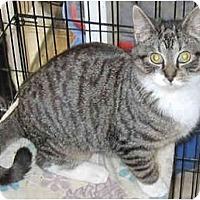 Adopt A Pet :: Tehya - Catasauqua, PA