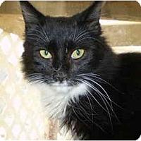 Adopt A Pet :: Locke - San Ramon, CA