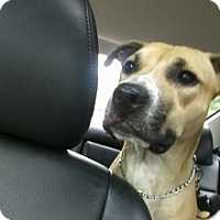 Adopt A Pet :: Clancy - selden, NY