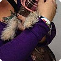 Adopt A Pet :: Storm - MAIDEN, NC