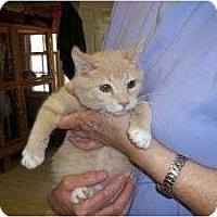 Adopt A Pet :: Hamlet - McDonough, GA