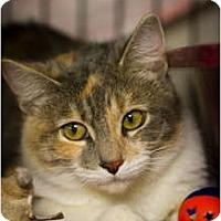 Adopt A Pet :: Elvira - Bulverde, TX