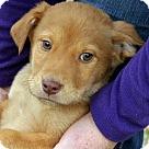 Adopt A Pet :: Gus T~B