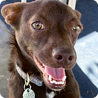 Adopt A Pet :: Lucy - Bellflower, CA