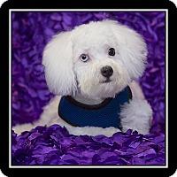 Adopt A Pet :: J.D. Jack Daniel - San Diego, CA