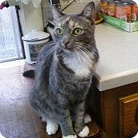 Adopt A Pet :: Peaches - Pasadena, CA