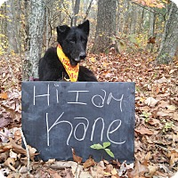Adopt A Pet :: Kane - Louisville, KY