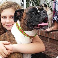 Adopt A Pet :: Magnolia - Wilmington, NC