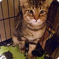 Adopt A Pet :: Julio - Glendale, AZ
