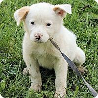 Adopt A Pet :: Matilda - Harrisonburg, VA