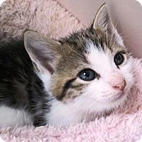 Adopt A Pet :: Milo - Lebanon, PA