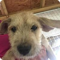 Adopt A Pet :: Preya - Quinlan, TX