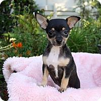 Adopt A Pet :: LUNA - Newport Beach, CA