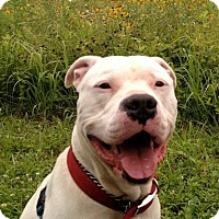 Adopt A Pet :: Zeus - Lawrenceville, NJ