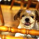 Adopt A Pet :: Charlie