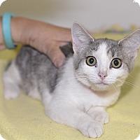 Adopt A Pet :: Star - Medina, OH