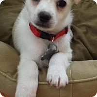 Adopt A Pet :: Alex - Manhattan Beach, CA